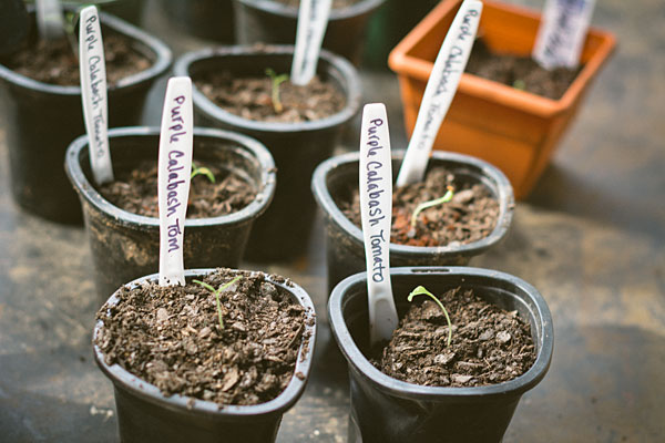 Use plastic knives to mark plants rather than wood plant markers. The wood can encourage mold to grow.