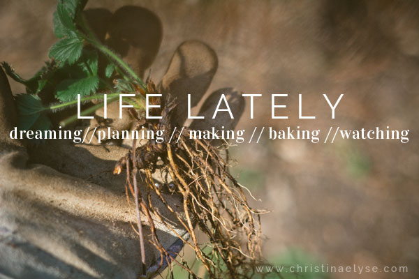Life Lately - dreaming, planning, making, baking, watching with christinaelyse.com