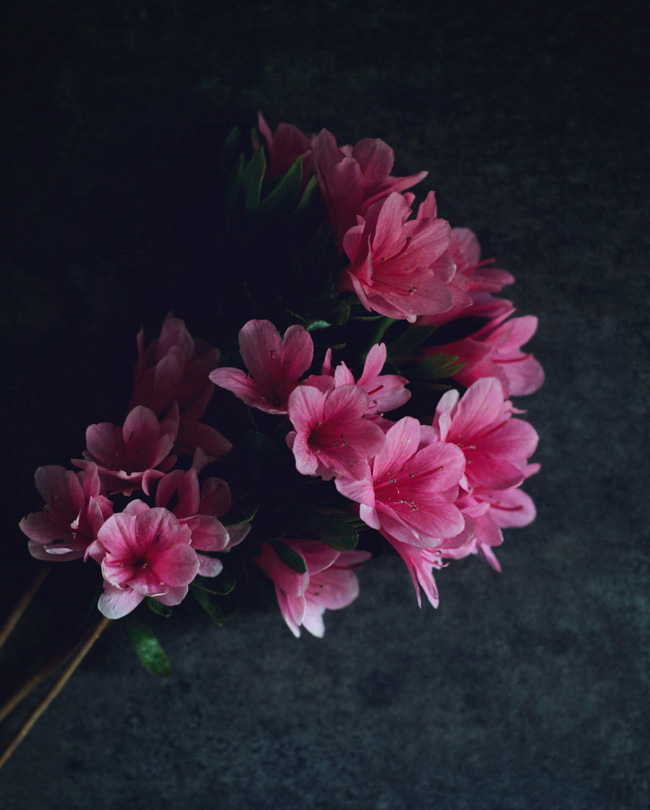 Slow Living - Azaela still life photo - moody & pink