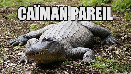 Crocodile_at_Auckland_Zoo_-_Flickr_-_111_Emergency.jpg
