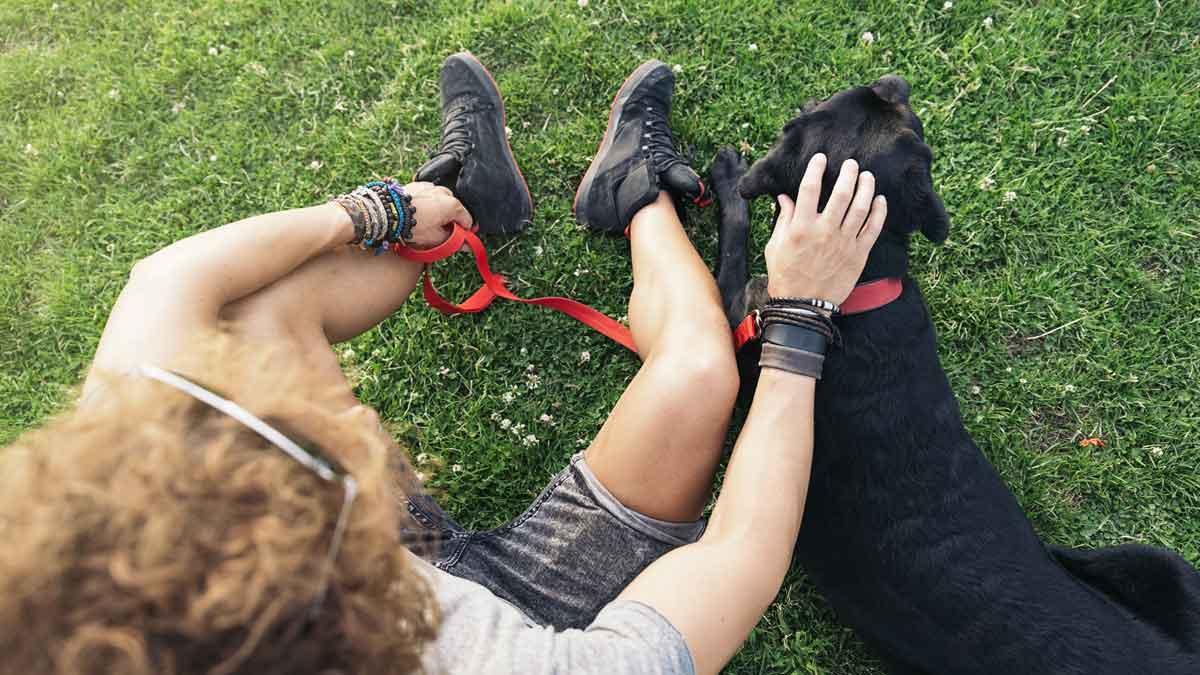 black-labrador.jpg