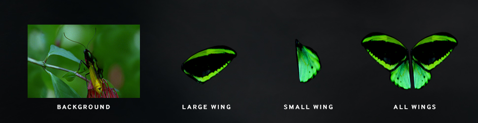 We took still imagery and brought these butterfly banners to life. Each wing was masked off and animated to show it's realism. The Samsung Tab S produces colors that jump off the screen.