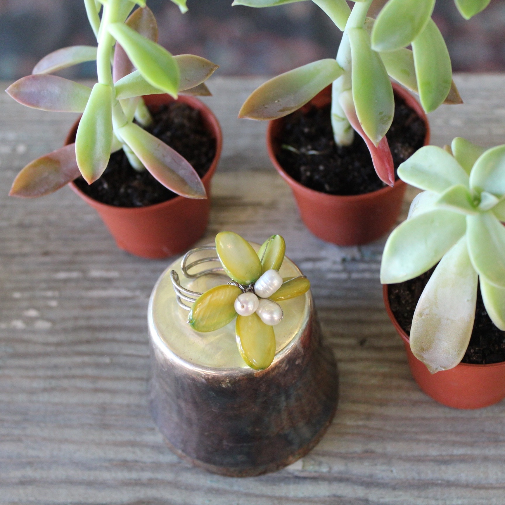 Succulent Plants and Pearl Ring