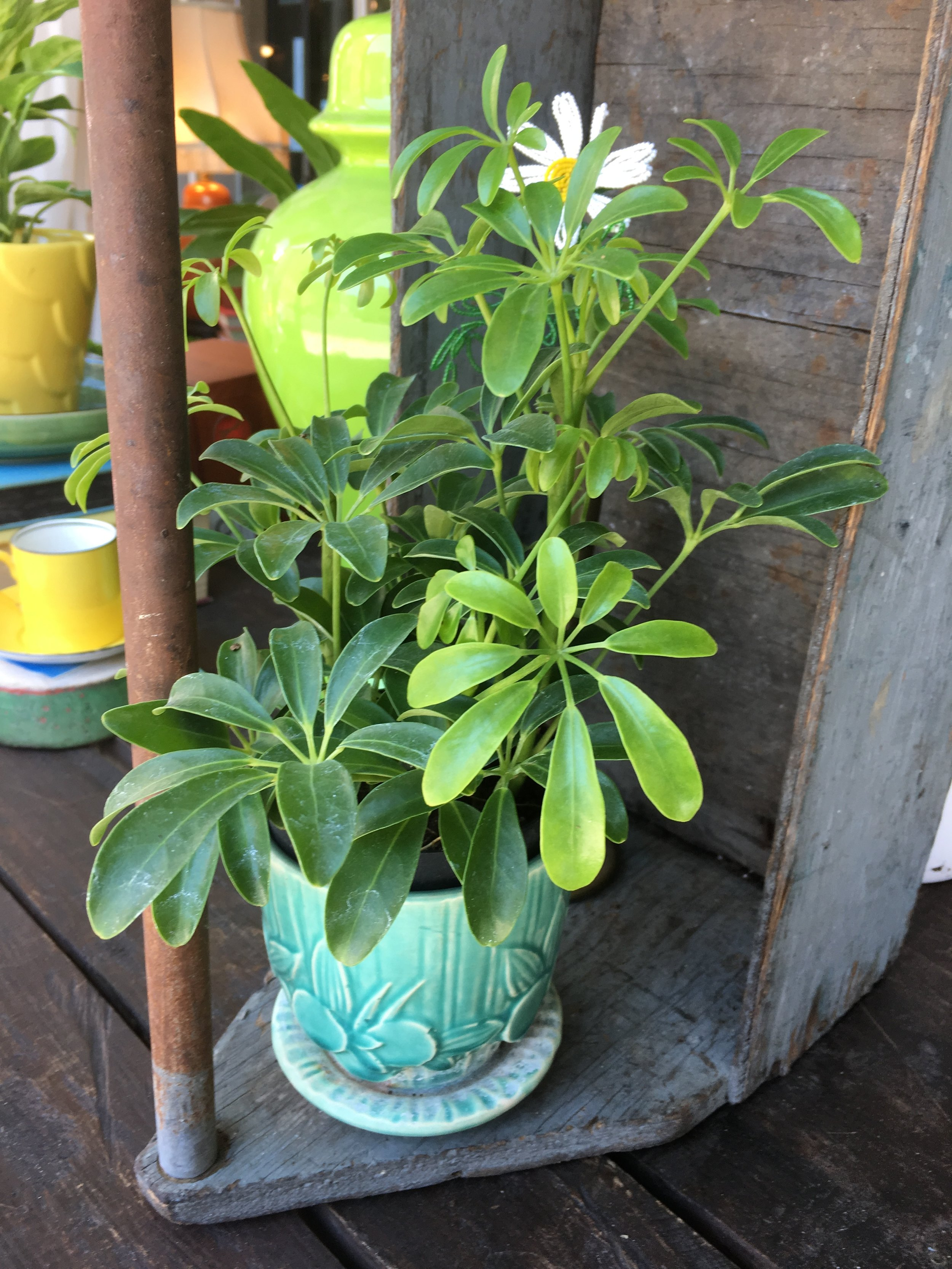 Plants and Pots - Getting ready for back to school. We just brought in tons of house plants in all sizes, shapes and colors. Finally have something to put in the pretty planters we have been collecting.We have succulents, hanging plants, floor plants, citrus trees and more