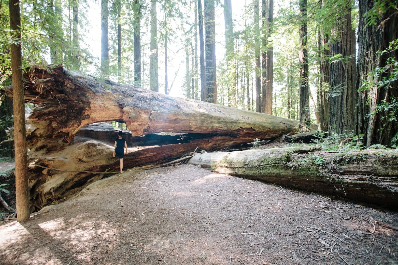 Girl-in-redwoods-1.jpg