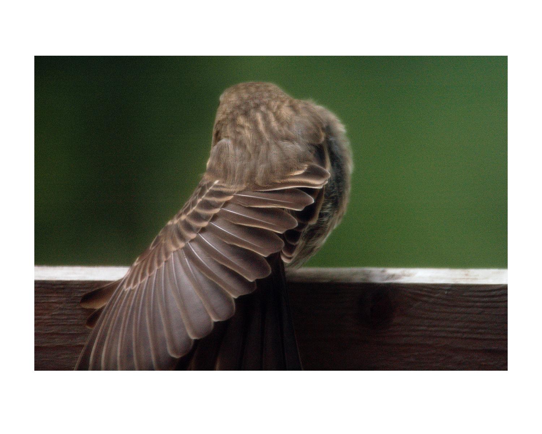 birds4_photos_stanislawakodman.jpg