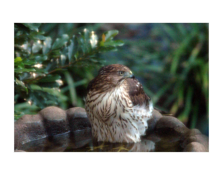 birds6_photos_stanislawakodman.jpg