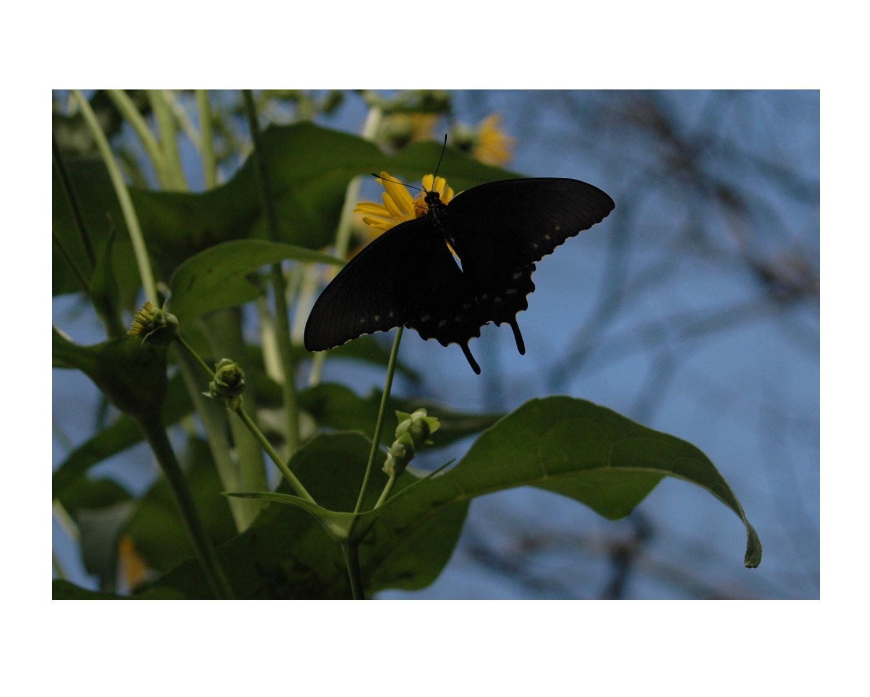 nature1dkbutterful_photos_stanislawakodman.jpg