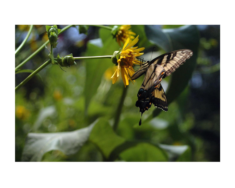 nature9butterfly_photos_stanislawakodman.jpg