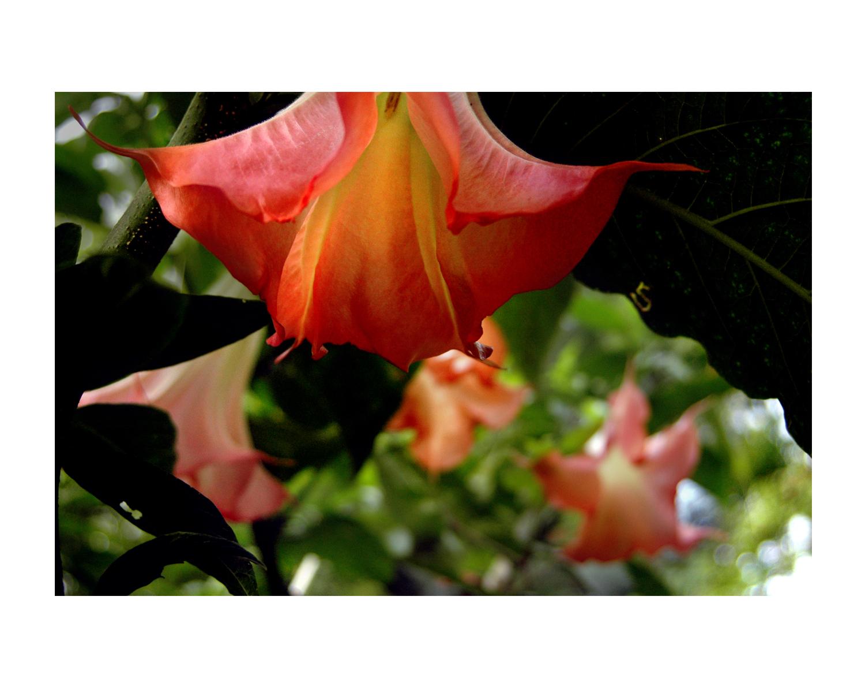 nature10trumpet_photos_stanislawakodman.jpg