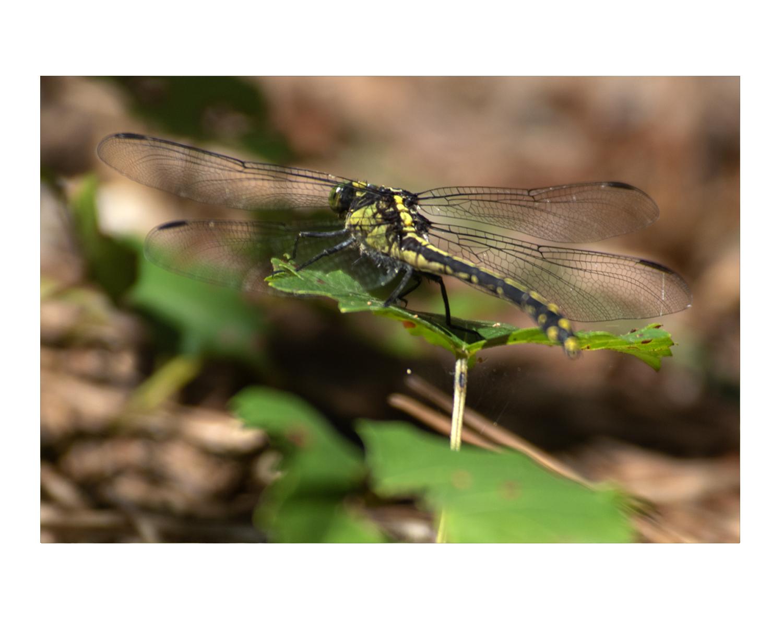 dragonfly_photos_stanislawakodman.jpg