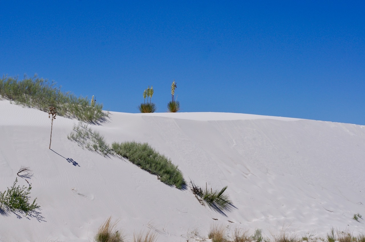 This is called the 'inter-dunal' area, where there are many patches of regular desert amongst the dunes, and more plant growth on the dunes themselves.