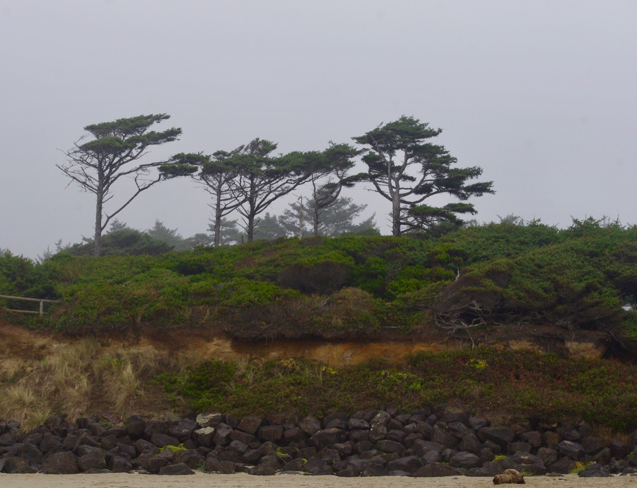We went walking on the beach and looked up at the bluff on which the campground is located. There were these trees sculpted by the wind.