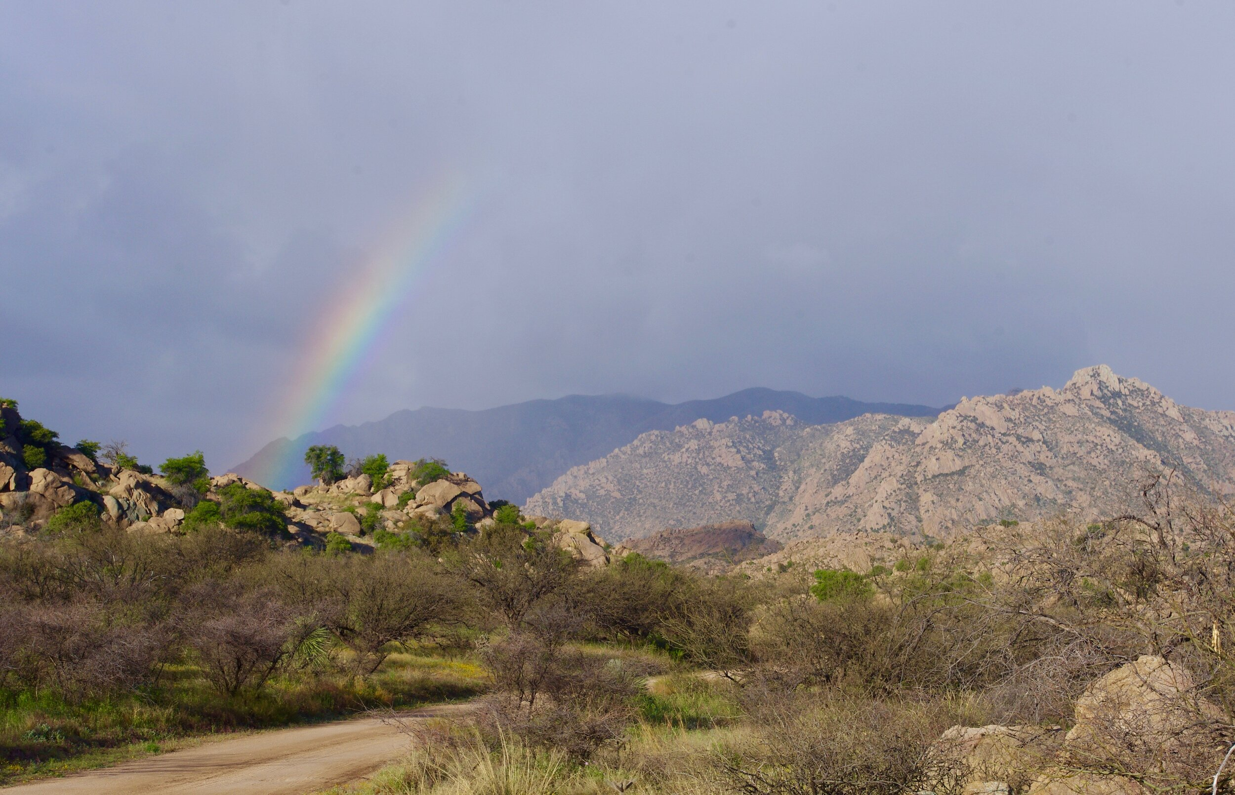 rainbow at NF Prescott AZ.jpg