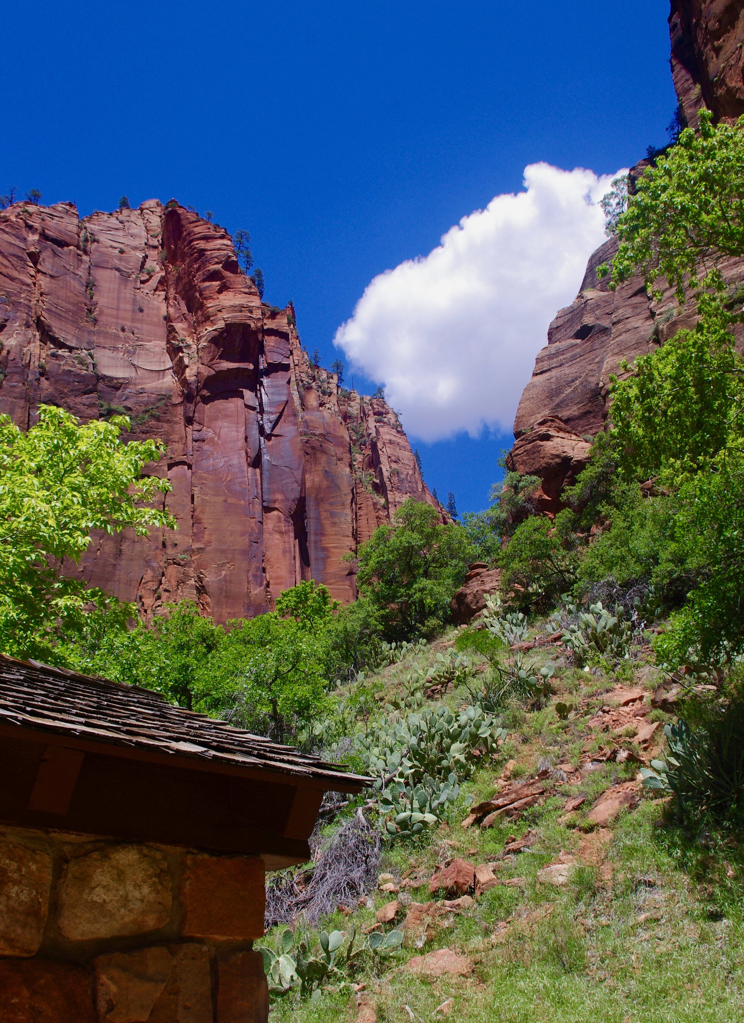 The views at Zion National Park are all vertical. One spends a great deal of one's time resting one's head on the back of one's neck while trying not to fall over.