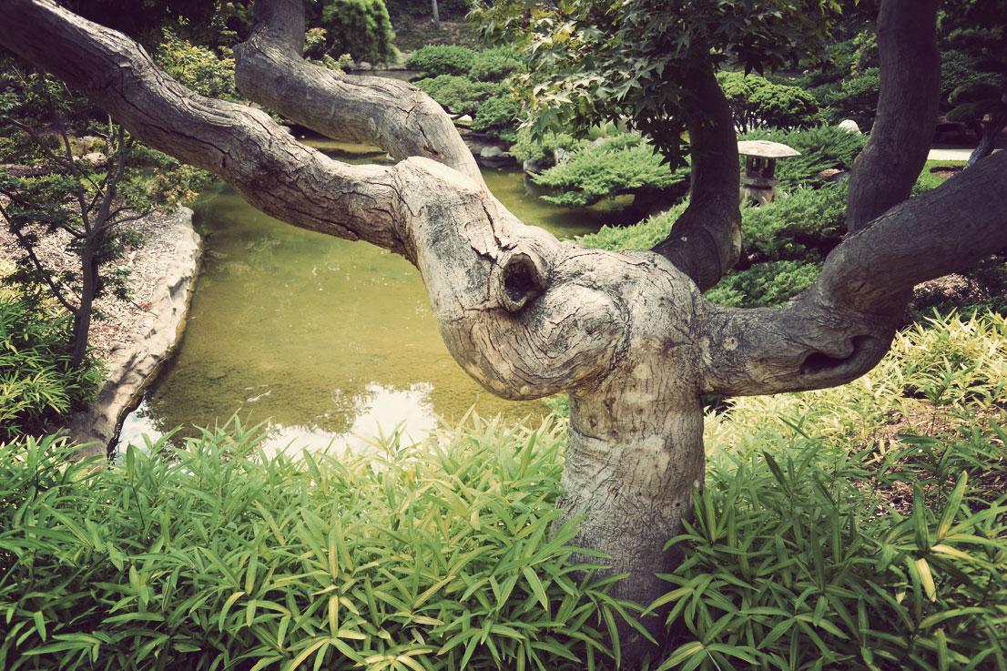 japangarden12.jpg