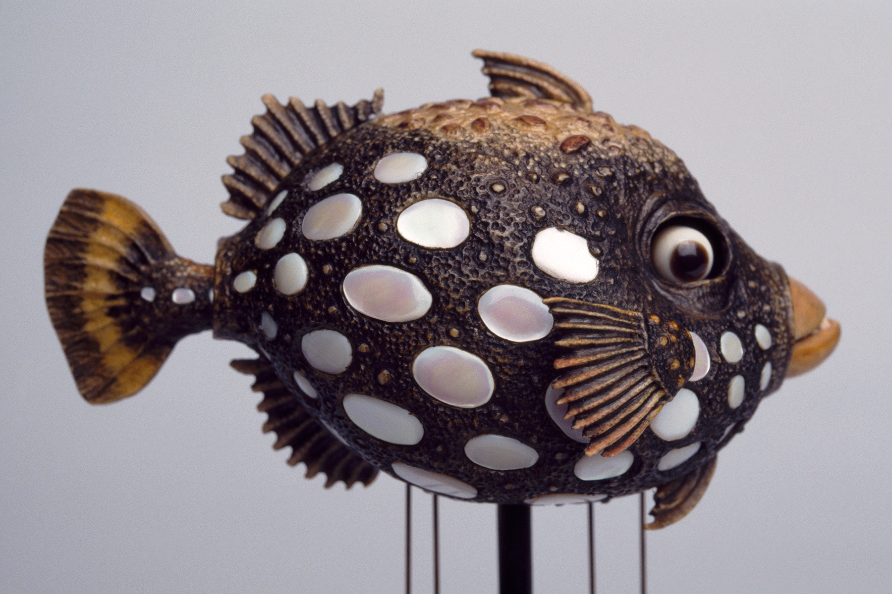 DavidBeck-TriggerFish_35mm_1_web.jpg