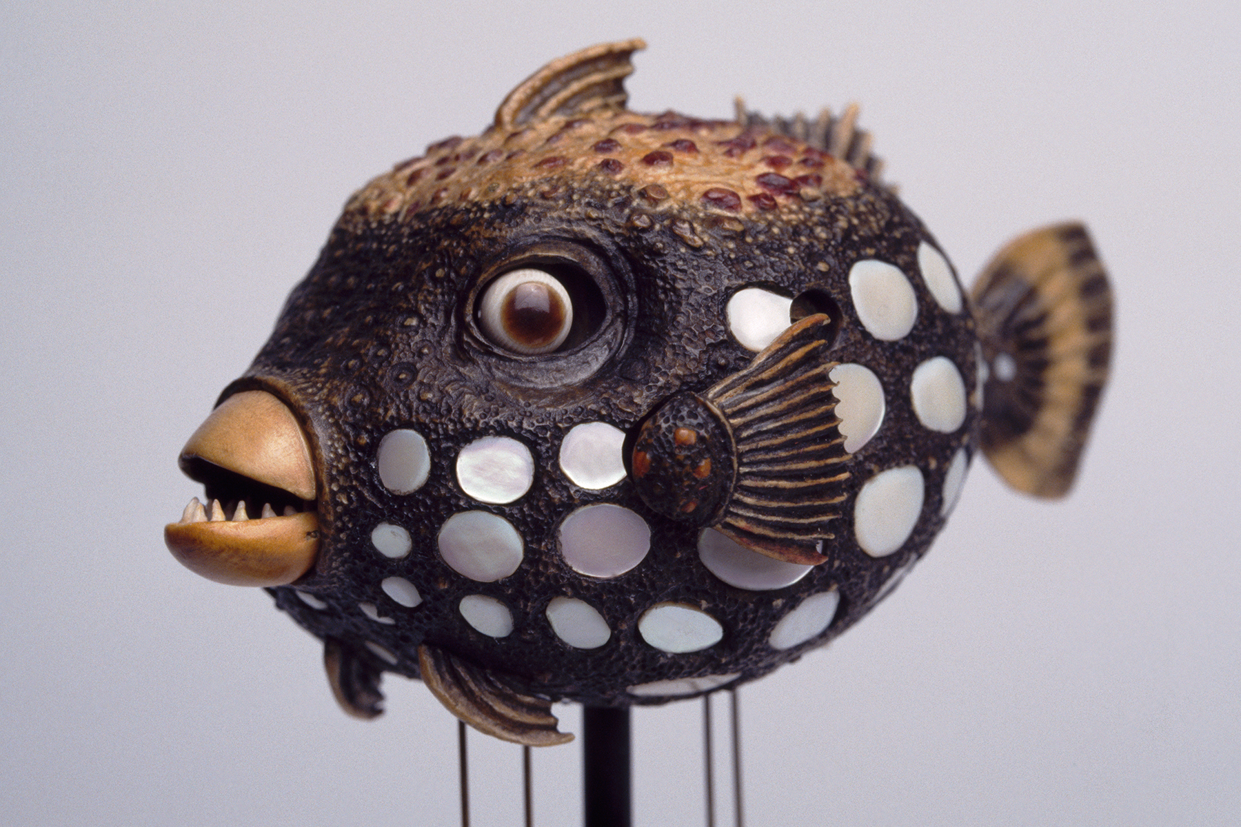 DavidBeck-TriggerFish_35mm_3_web.jpg