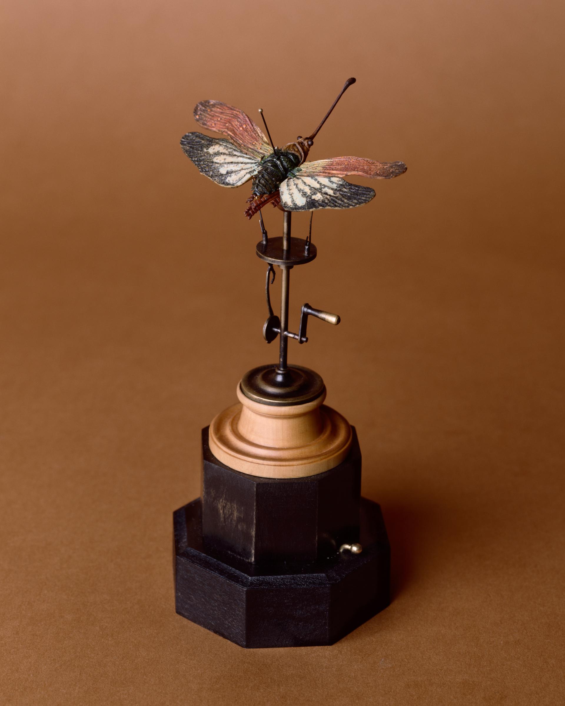 Mothcanique I