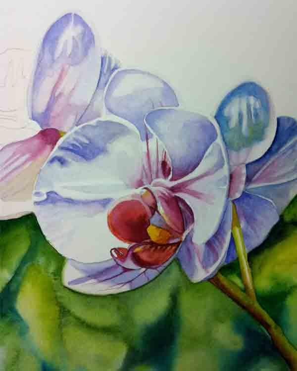 Orchid-1.jpg