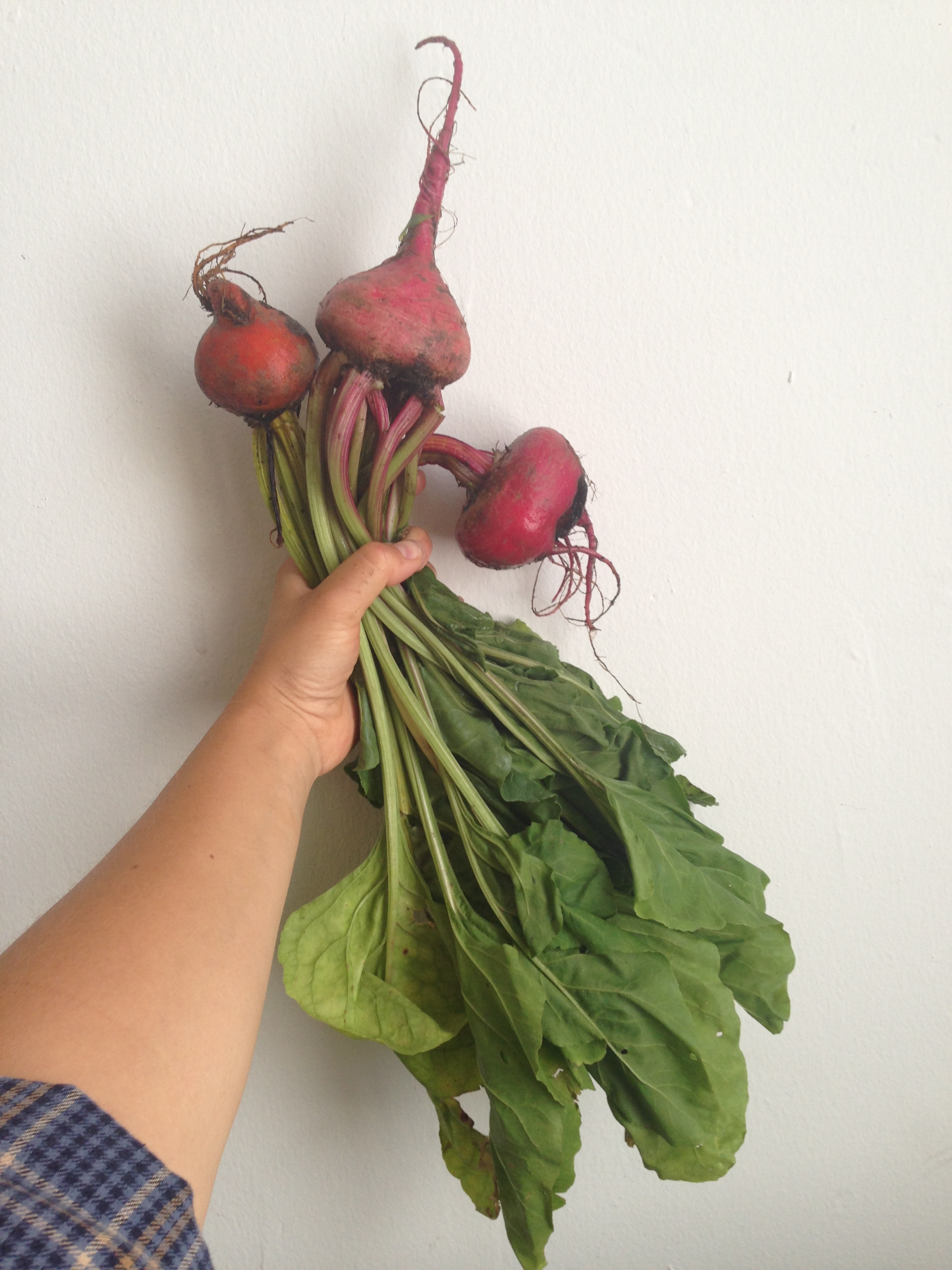 With split radishes come other split roots, like these beets