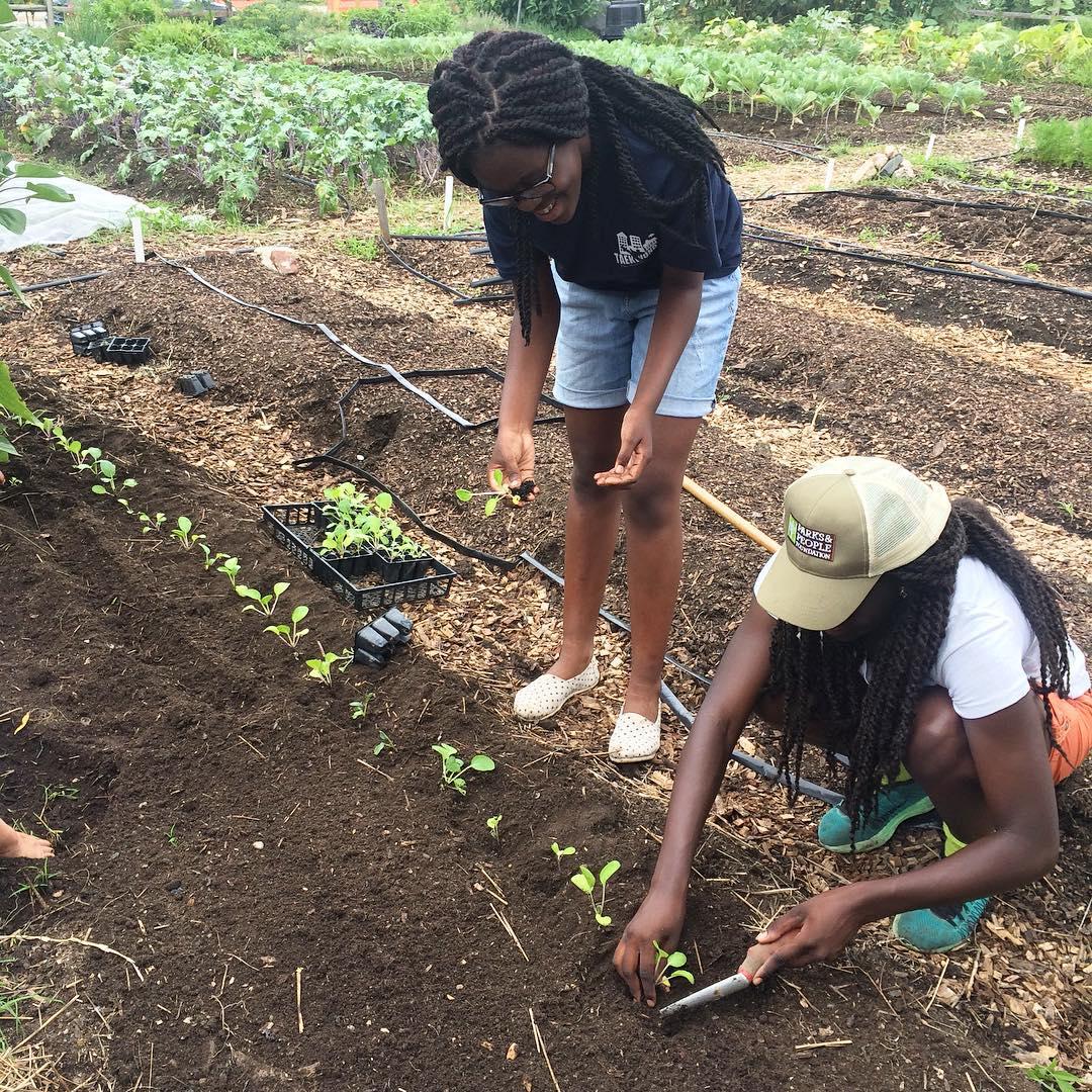 Planting seedlings!