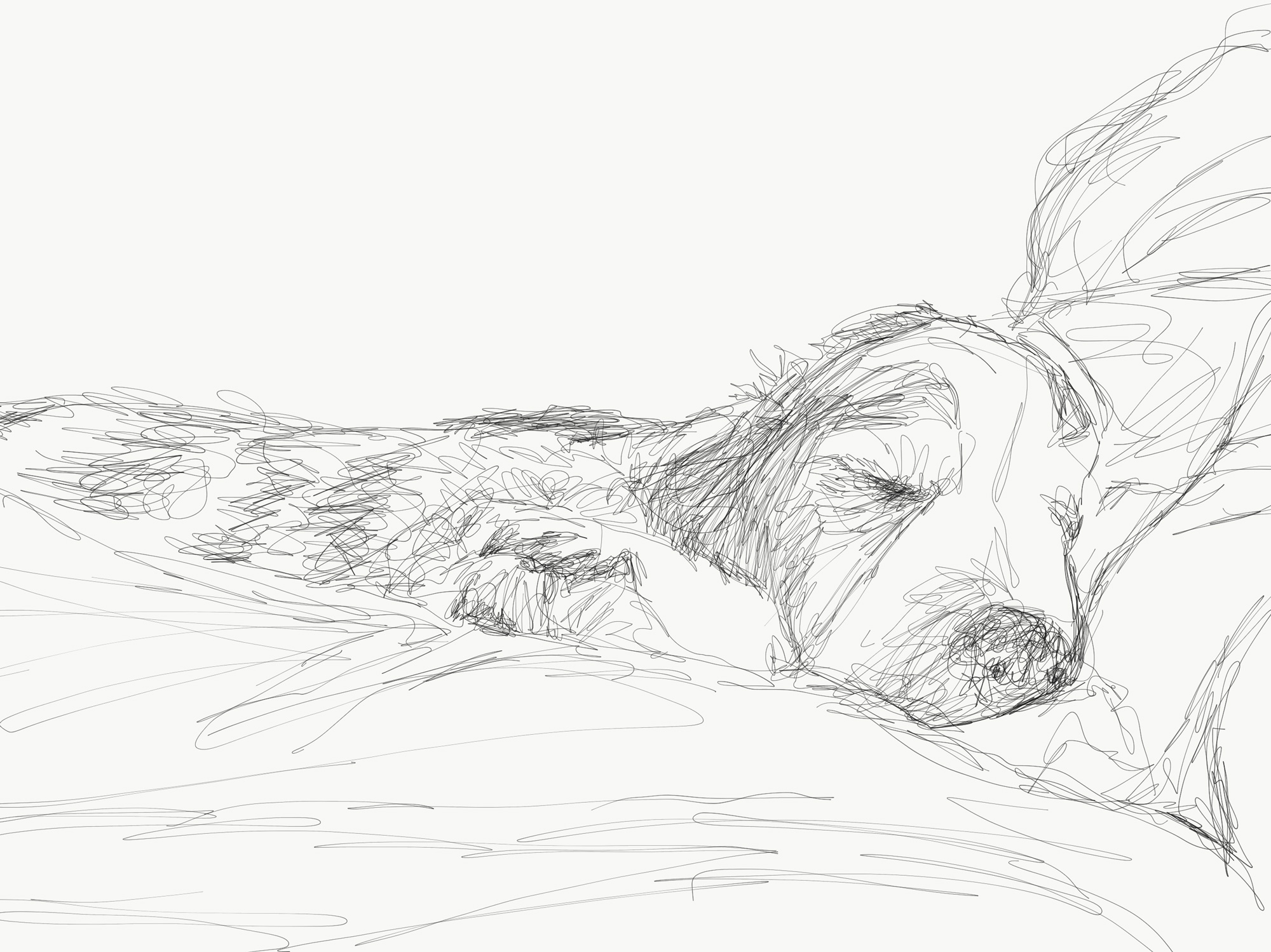Milo No. 7 (sleeping dog)