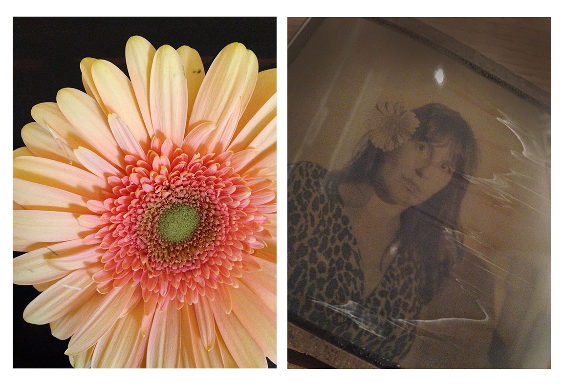 gerber daisy-- such a happy flower                        polaroid negative / peel apart film
