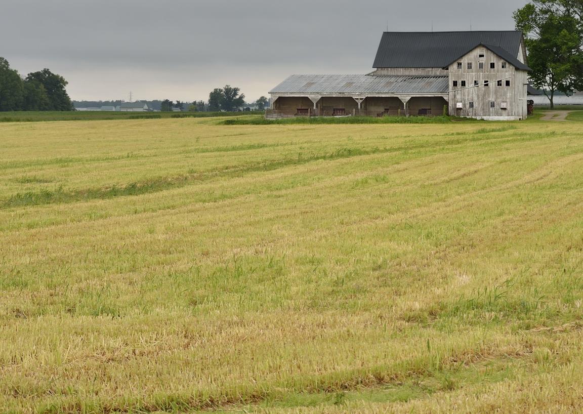 hayfield2email.jpg