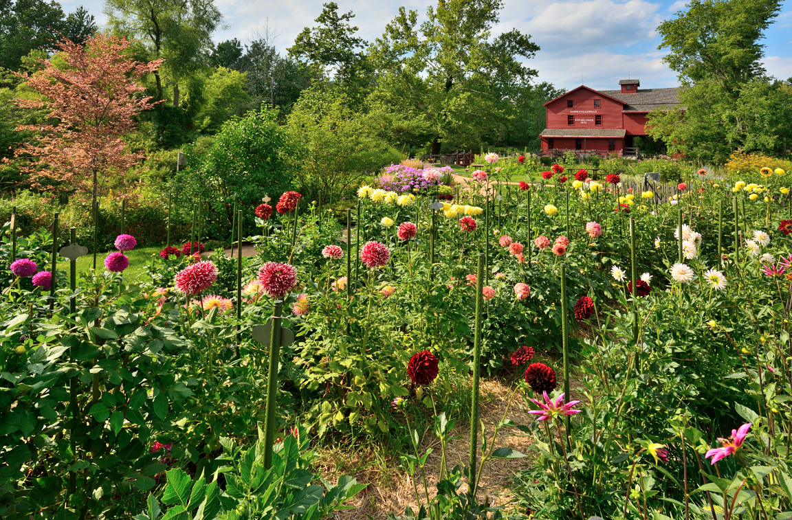Bonney's Mill and the Dahlia Garden