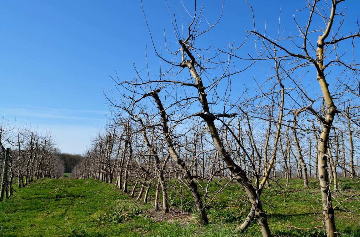 Kercher's Orchard