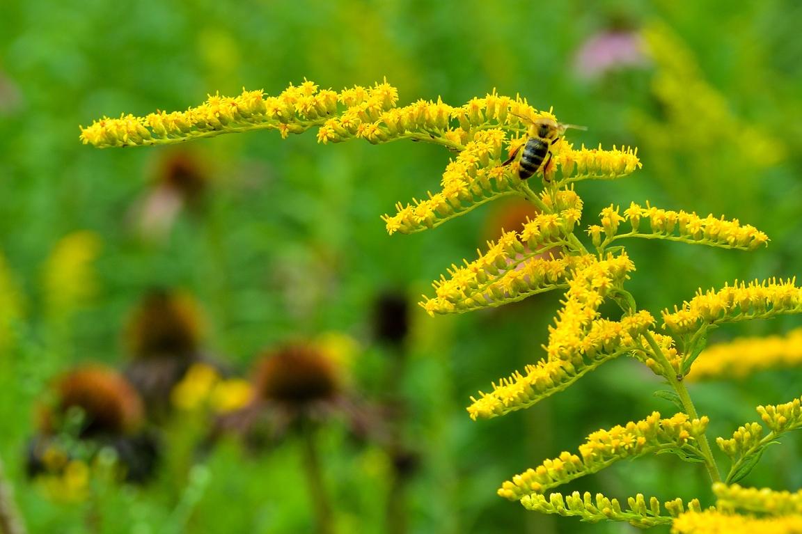 Bee Strikes Gold