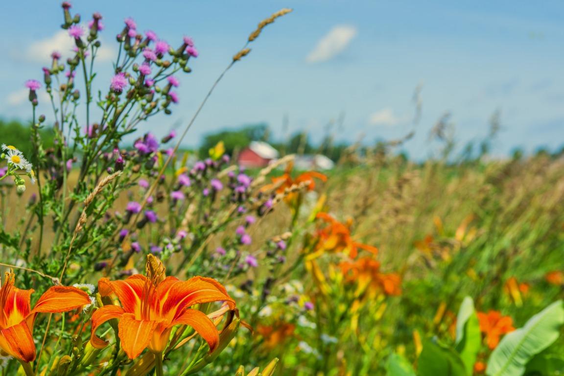 fencerowflowers1email.jpg
