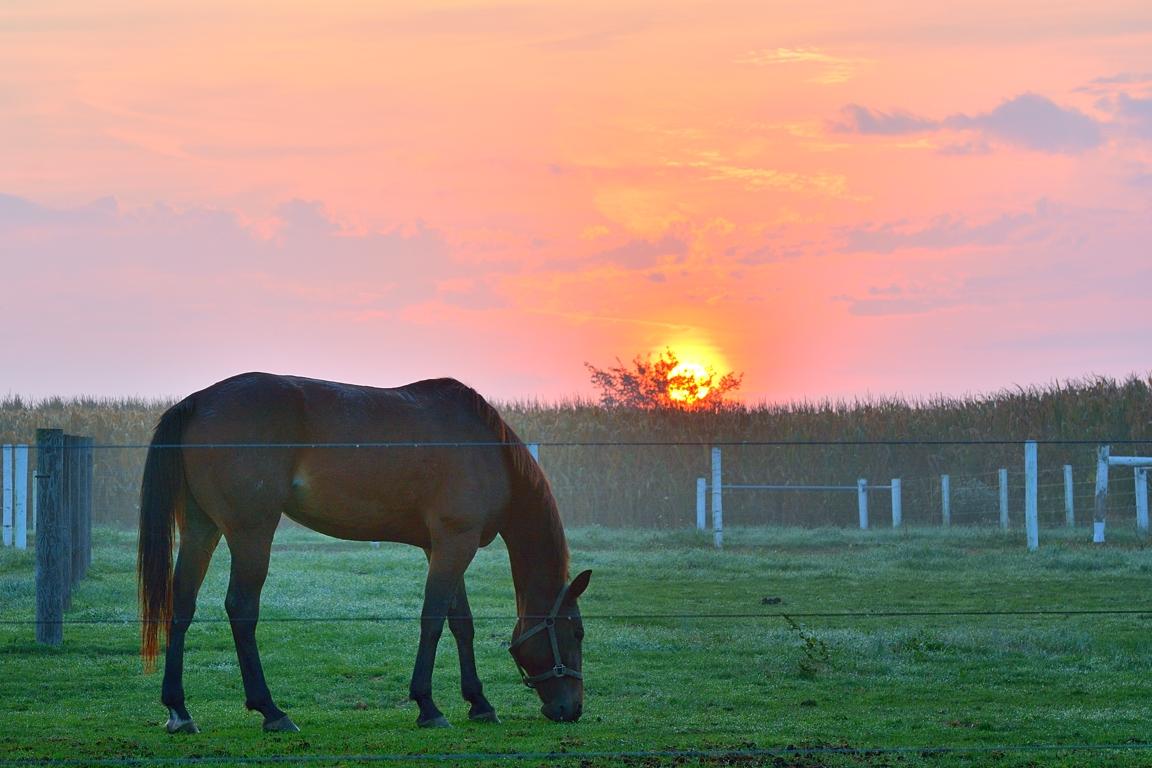 horsegrazing1email.jpg