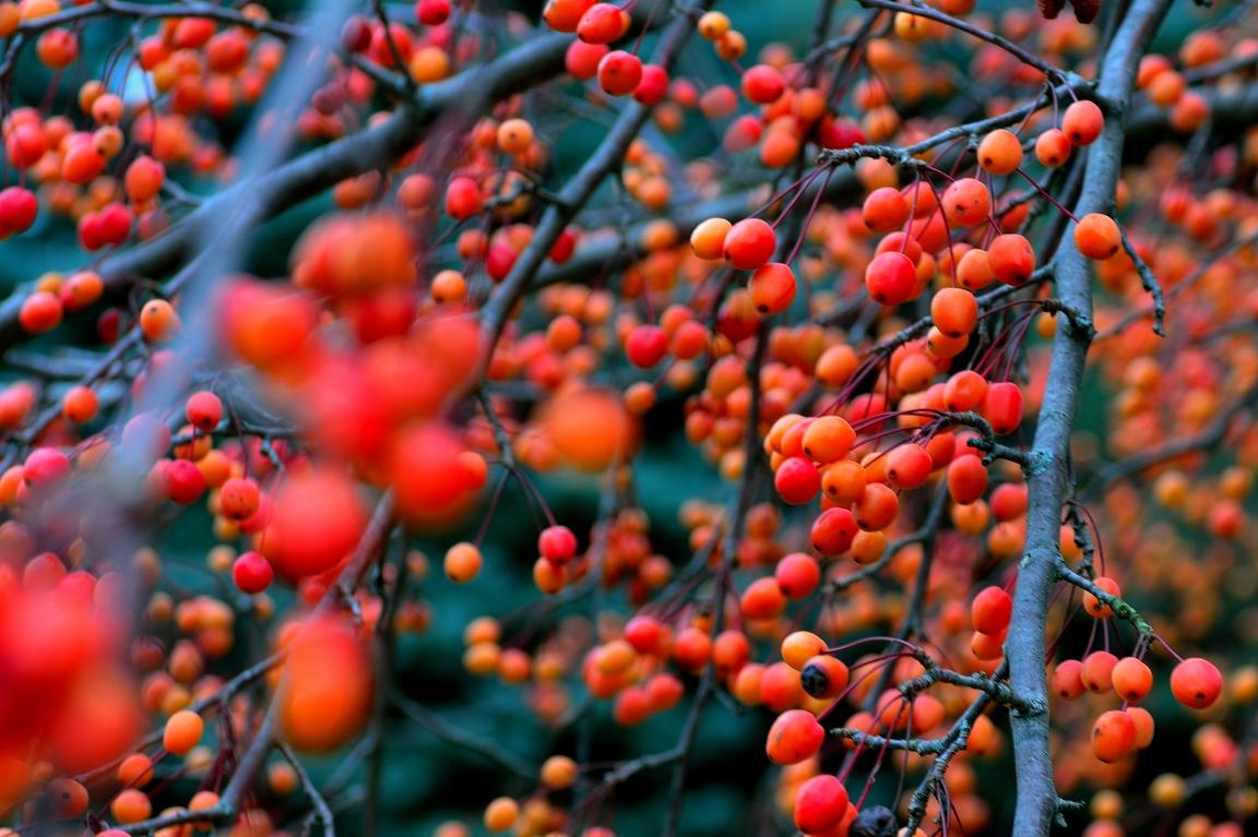 fallberries2email.jpg
