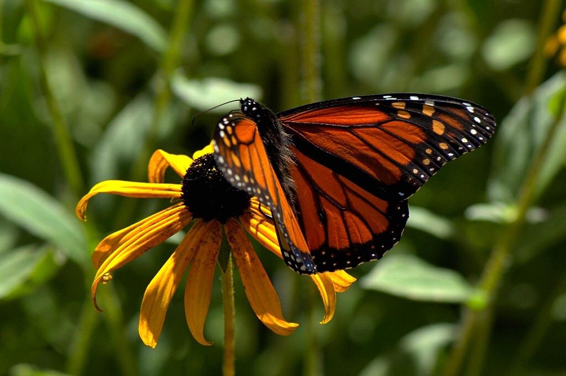 butterflyfeastemail.jpg
