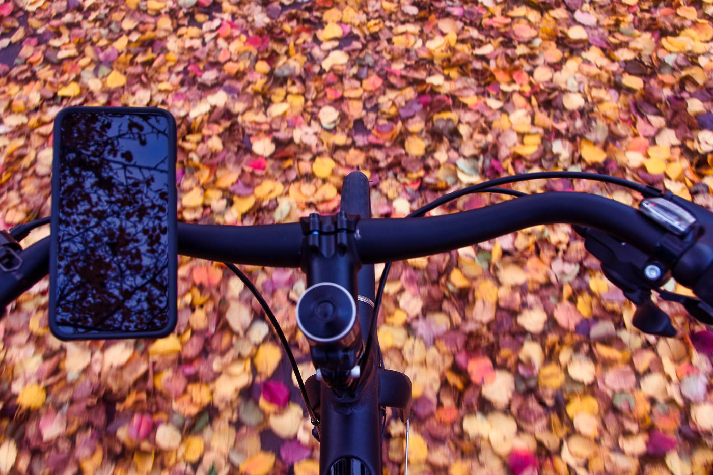 cyclingovertheleaves.jpg