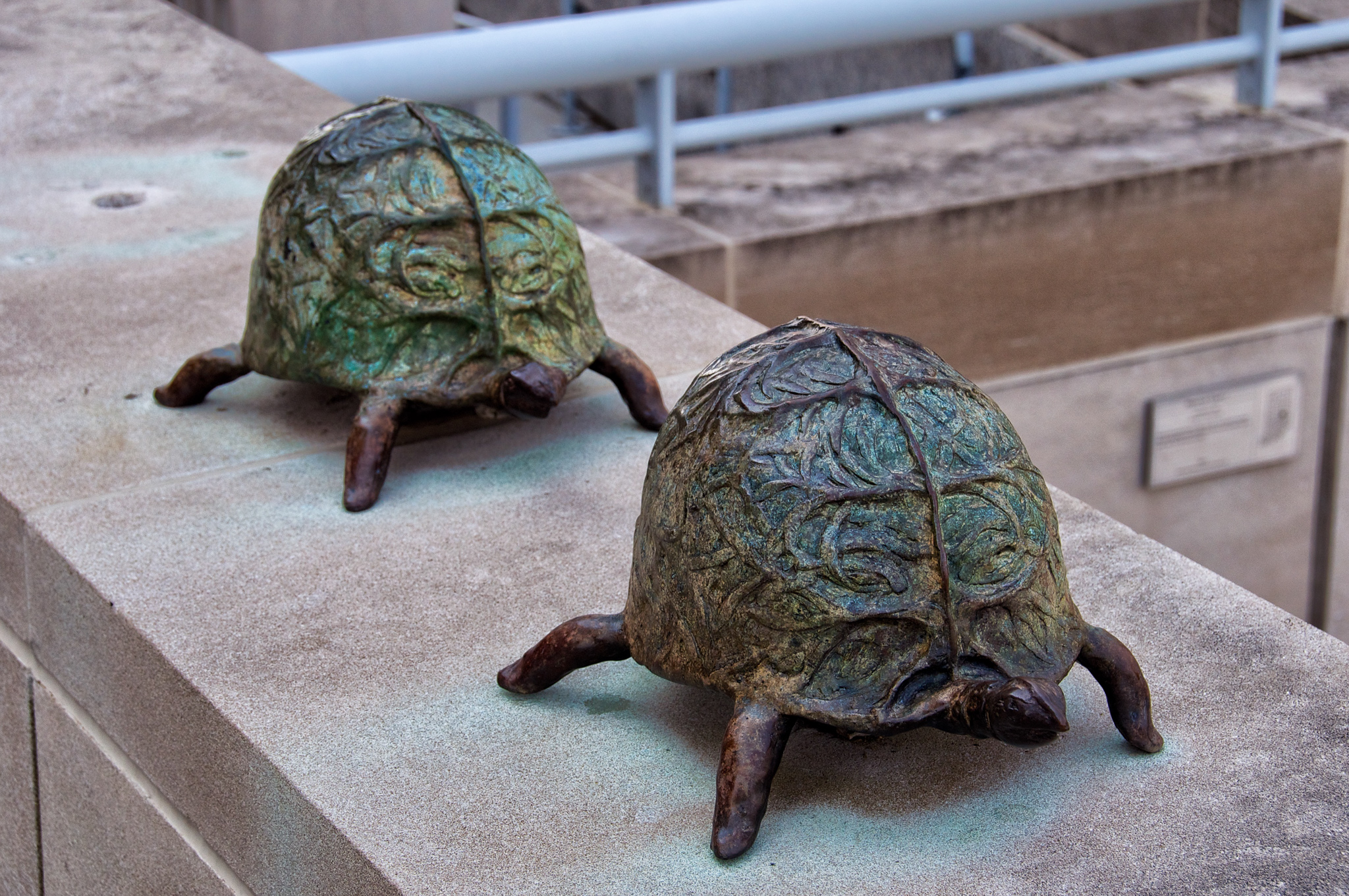 Another view of the turtles at the Indiana State Museum, from Where Am I? Game #211.