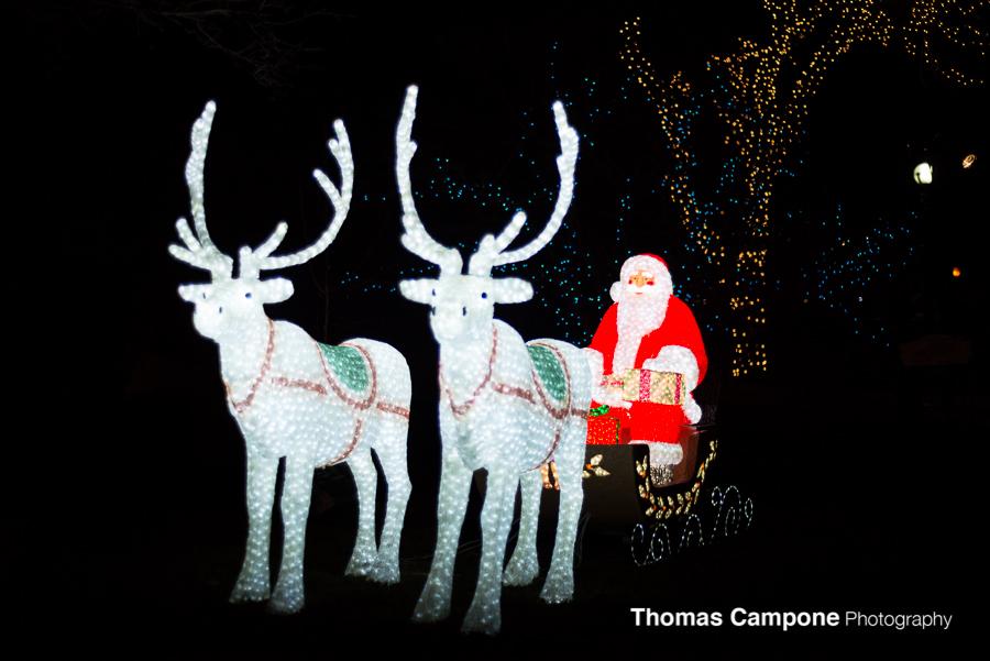 Santa is at Lincoln Park Zoo Lights!
