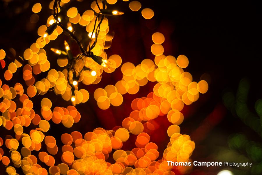 Lincoln Park Zoo Lights-3.jpg
