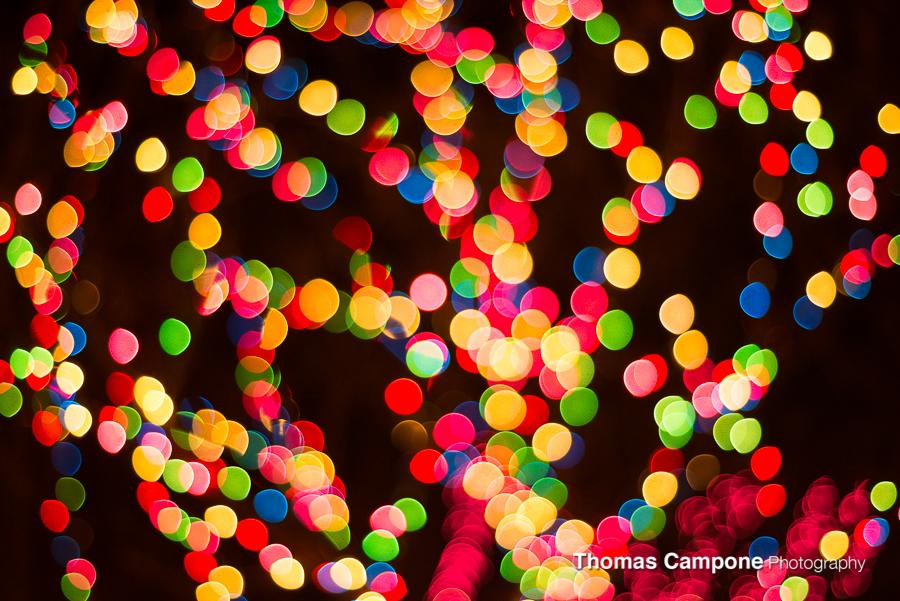 Lincoln Park Zoo Lights-4.jpg