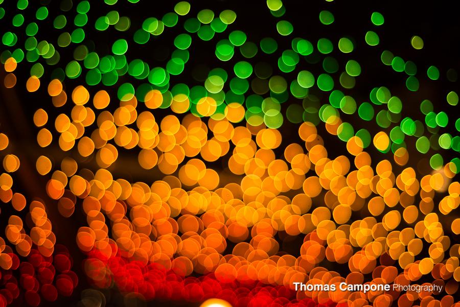 Lincoln Park Zoo Lights-5.jpg