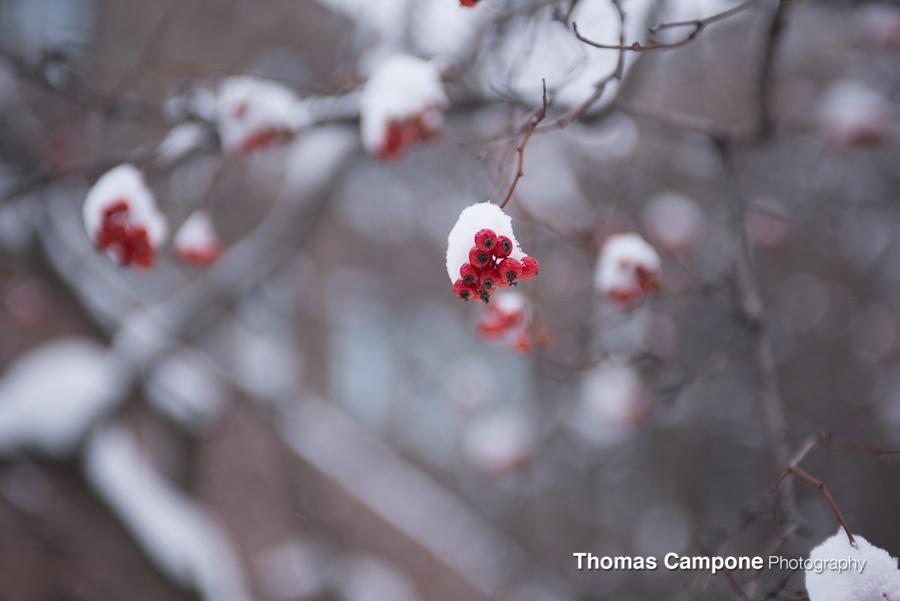 Winter Vortex 2014-1.jpg