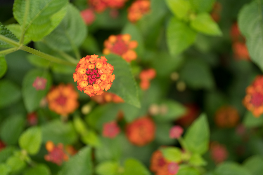 Chicago-Botanic-Garde-4.jpg