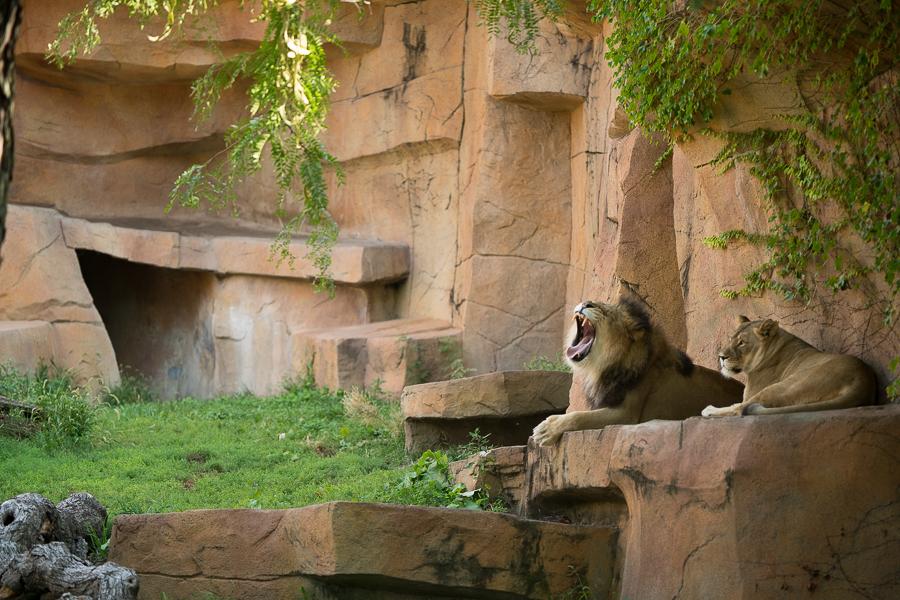 Brookfield Zoo-2.jpg