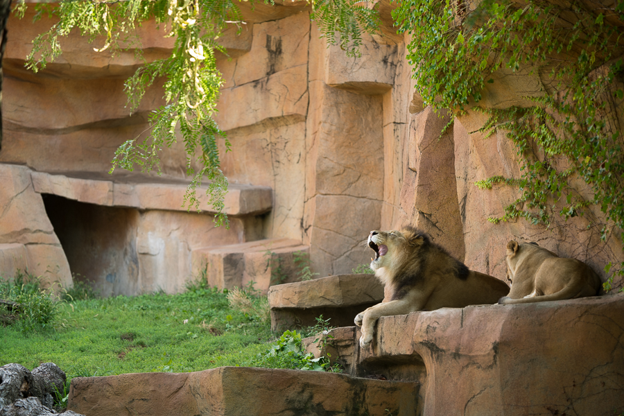 Brookfield Zoo-1.jpg
