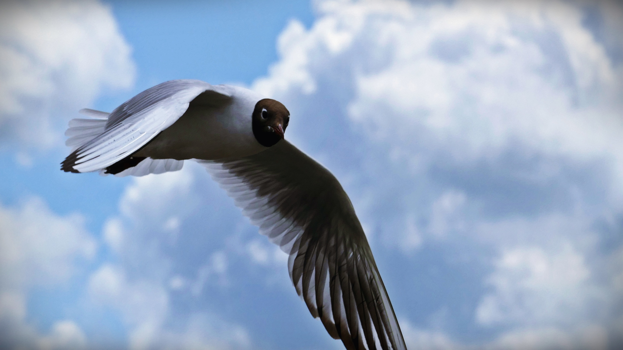 01 Seagull 02.JPG