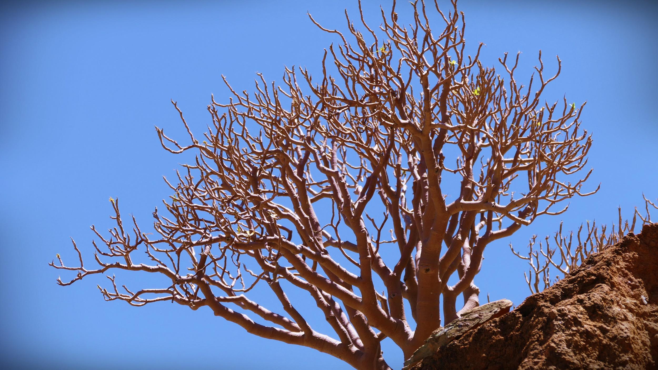 02 Desert Rock.JPG