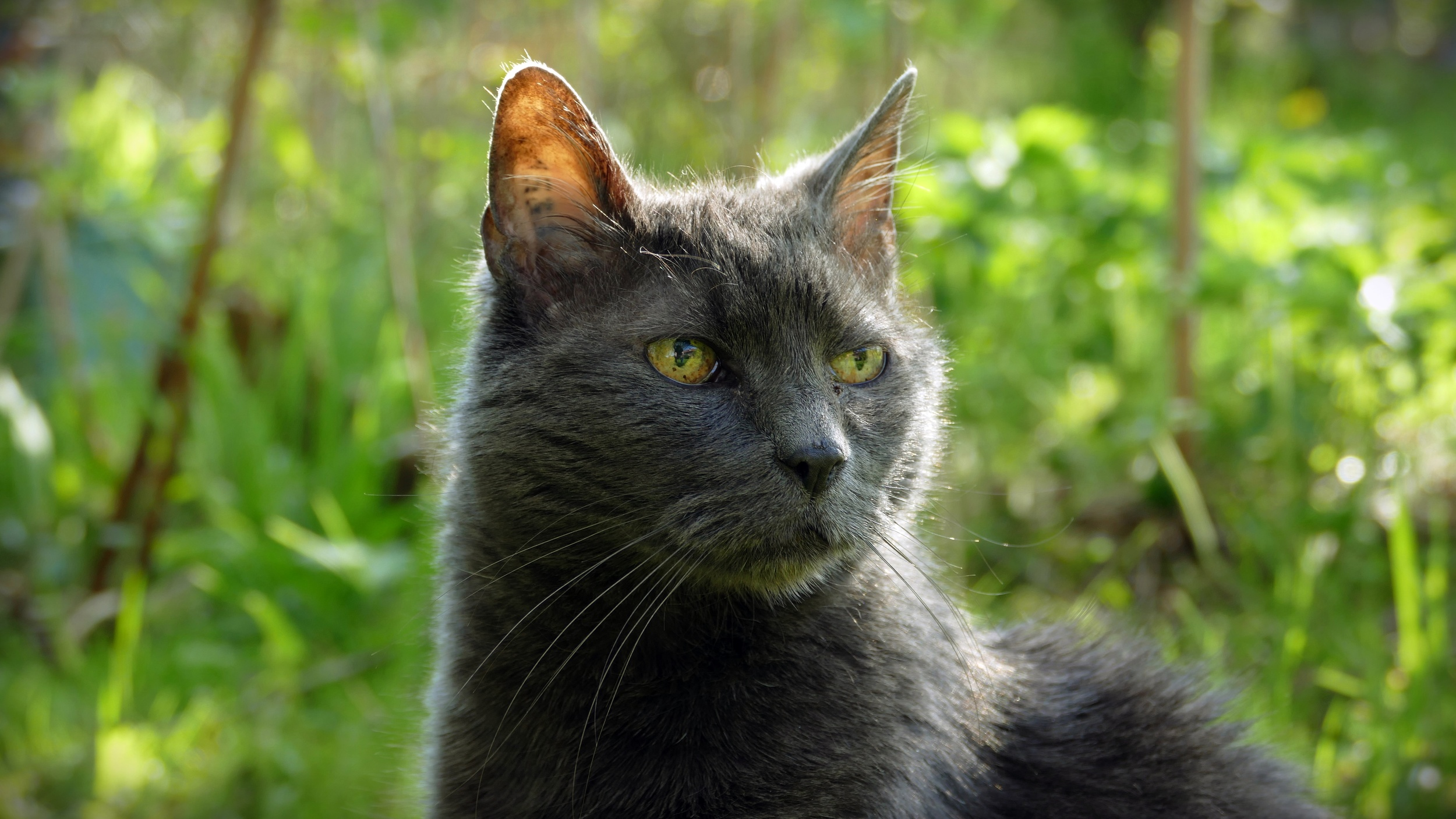 03 Lucky the Cat.JPG