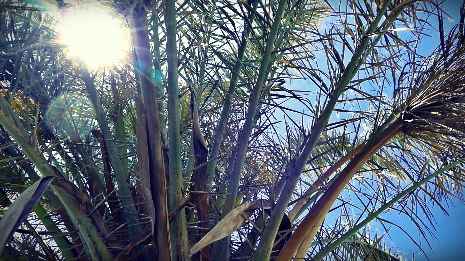 04 Palmtree.jpg